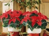 new-year-flower-home-decoration3_resize