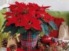 new-year-flower-home-decoration4_resize
