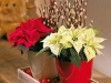 new-year-flower-home-decoration7_resize